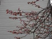 春です!!!